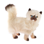 Plush Pets - Primrose the Himalayan Cat 28cm