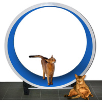 Ferris GEN 3 Cat Exercise Wheel Blue