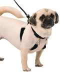 Sporn Dog Training Halter Harness Small (Neck 22 - 30cm)