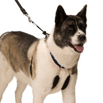 X-Large Sporn Dog Training Halter Harness (Neck 58 - 83cm)