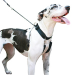 Big Dog Training Halter - Medium