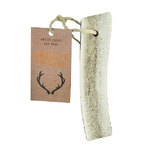 Dudley Cartwright Naturally Shed Whole Antler - Small